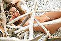 Villa Rosa Trans Escort Giselly  Bella 348 8233061 foto hot 12